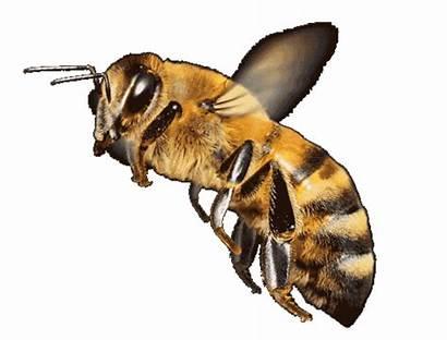 Bee Honey Ciao