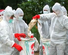bird flu Avian Influenza