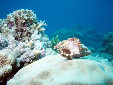 Scuba Diving in the Great Barrier Reef | travelmemo.com travel blog