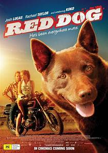 Red Dog Picture 1