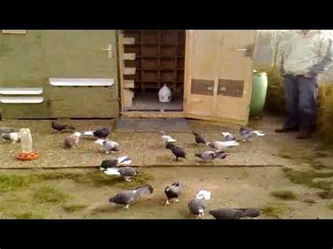 Tauben Im Garten Youtube