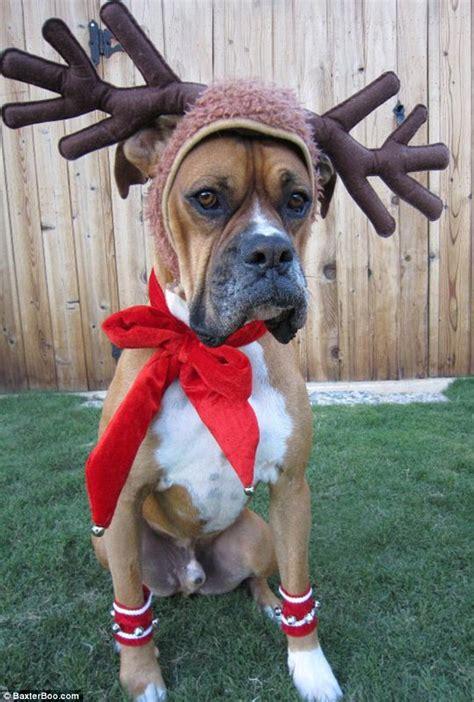 dressing  dog   christmas
