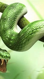 wallpaper zh: 3d images of animals