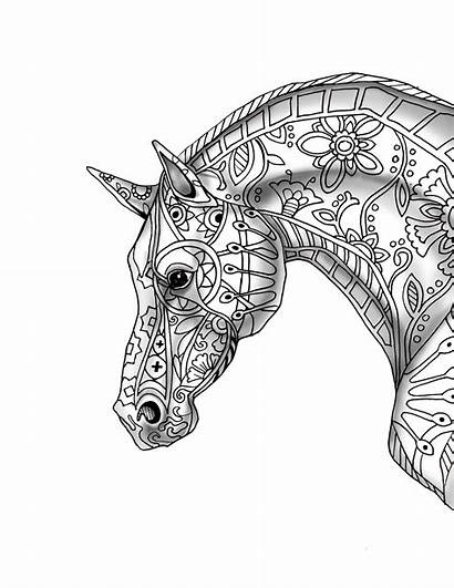 Coloring Horse Pages Printable Adult Profile Colouring