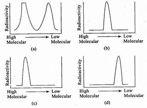 Ncert Exemplar Problems Class 12 Biology Molecular Basis