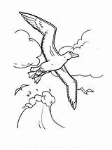 Albatross Coloring Birds Printable Recommended sketch template
