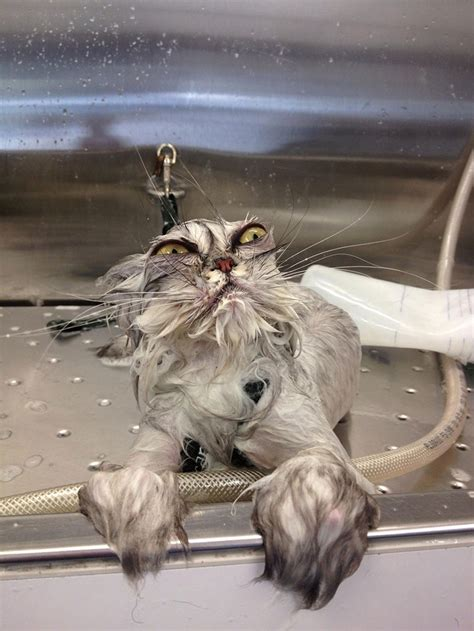 awesomely funny pictures  wet cats