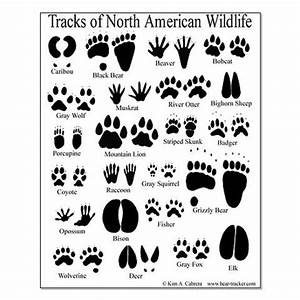 animal tracks guide posters | Kids Party | Pinterest ...