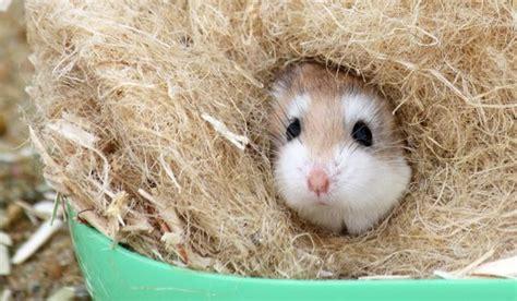 Hamstergehege Einrichten  Die Wichtigsten Punkte