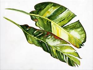 Banana Leaf Painting Pictures