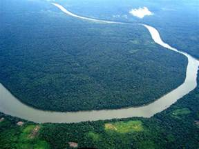 The Amazon rainforest provides 20% of the world's oxygen