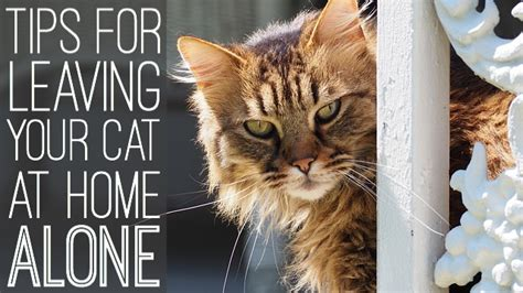 tips  leaving  cat   home  vacation