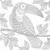 Paradise Coloring Tropical Template sketch template