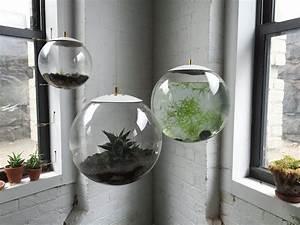 Terrarium Plante Deco : plante aquatique jetez vous l 39 eau en 47 photos ~ Dode.kayakingforconservation.com Idées de Décoration