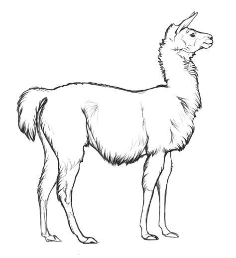 llama color page argentina animal templates animals