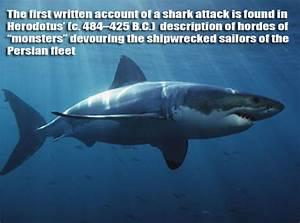 Random Shark Facts 8 Pics