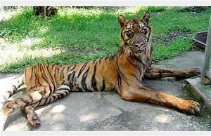 Les animaux du zoo de Surabaya vivent un cauchemar vivant ! ce zoo mérite d'être fermé