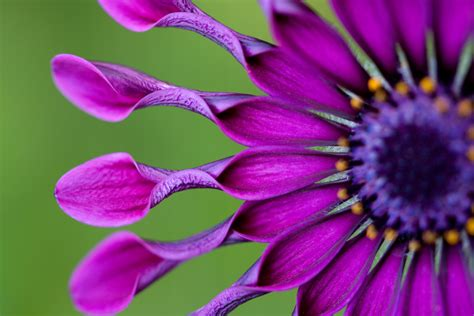 tips  great macro flower photography  craftsy