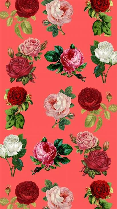 Iphone Floral Wallpapers Roses Supreme Rose Flower