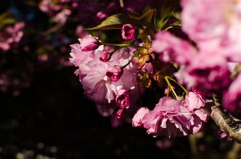 Free Images : tree nature branch leaf flower petal