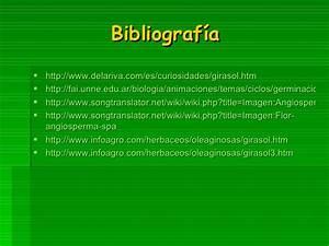 El Girasol Barbara Abella