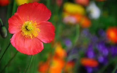 Flower Wallpapers Desktop 4k