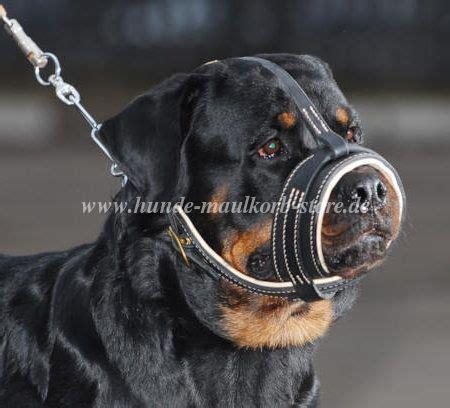 rottweiler hund maulkorb ist gepolstert rottwilers