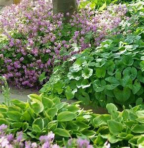 Gartengestaltung Unter Bäumen : stauden grundlagenwissen f r deine gartengestaltung ~ Yasmunasinghe.com Haus und Dekorationen