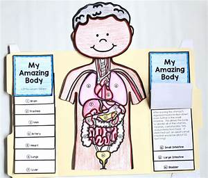Labeled Brain Diagram For Kids