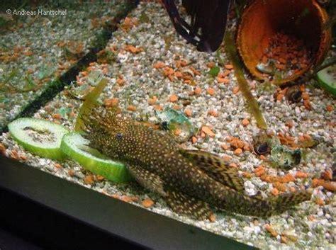 Andreas' Aquarium