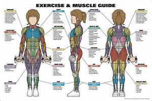 Womens Exercise And Muscle Guide Fitness Workout Anatomy Wall Chart Poster