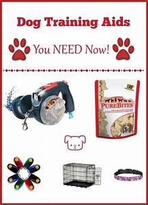 5 dog training aids a new owner can39t do without for Dog training aids