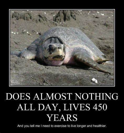 Funny Turtle Memes - 88 best sea life laughs images on pinterest funny animal pics funny animals and funny pets
