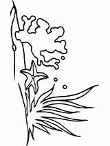 Seaweed Coloring Mycoloring Printable Colors sketch template
