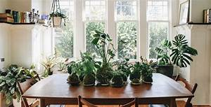 Spaces interior design in portland ore pistils nursery for Interior decorating houseplants