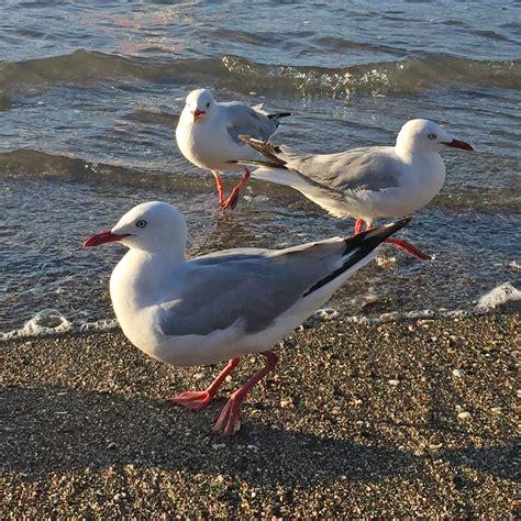 Online Painting Workshop 59 Seagulls