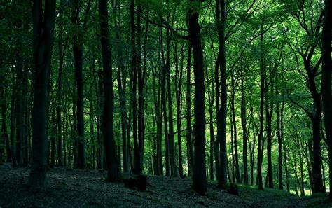 Green Forest by Green Forest Wallpapers Green Forest Stock Photos