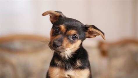 Best Appartment Dogs 15 best apartment dogs for you city dwellers