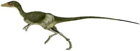"""Compsognathus """"dainty Jaw"""" Late"""