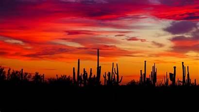 Sunset Cacti Arizona Silhouettes 1080p Background Fhd