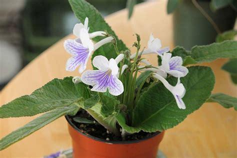 piante da interno con poca luce piante da appartamento necessitano di poca luce