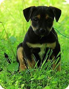 Jack russell terriers, Russell terrier and Terrier mix on ...