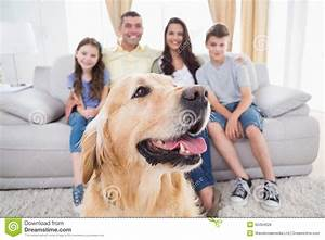 Dog sitting with family at home stock photo image 50494628 for At home dog sitting