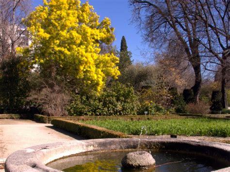 cour de cuisine gratuit mimosa des jardins beaux en hiver