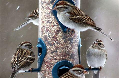 attracting birds feeding birds attract birds to your