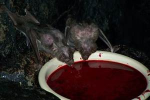 Do Vampire fangs act as straws? - Science Fiction ...