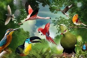 Birds of Eden Free Flight Sanctuary, Plettenberg Bay ...