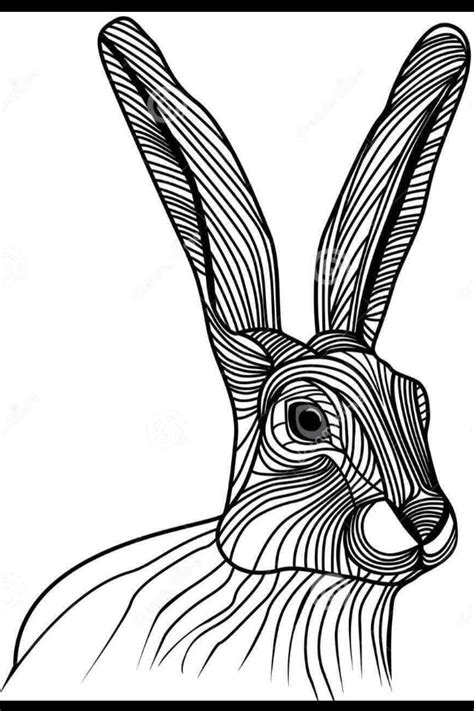 jackrabbit drawing    ayoqq cliparts