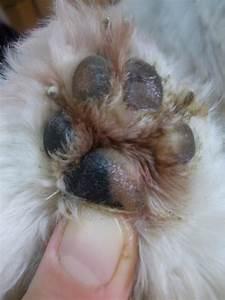 Грибок между пальцами у собак