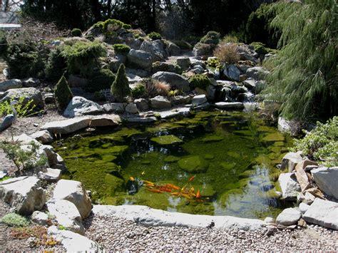 pictures of koi ponds file flickr brewbooks koi pond jpg